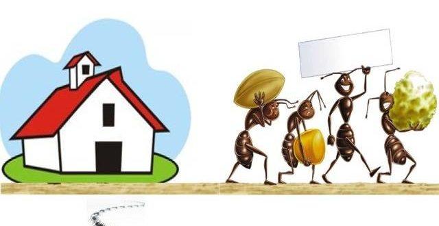 Formiche in casa rimedi naturali per eliminarle - Formiche in cucina ...